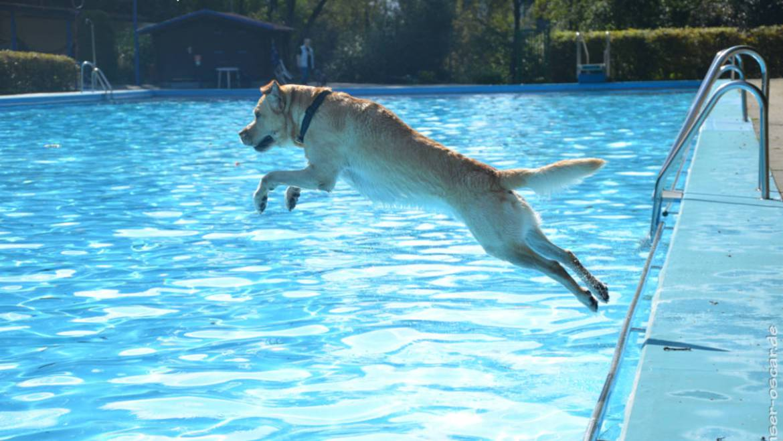 Hundeschwimmen