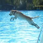 Hundeschwimmen im Freibad Eckbusch